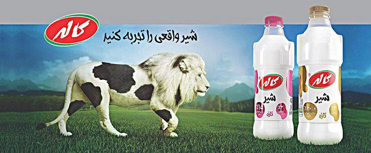 بررسی تبلیغات شرکت کاله درباره مصرف شیر